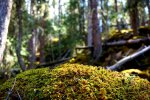 Moss in the mountains