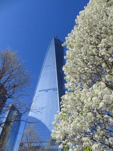 Ground Zero Survivor tree NYC
