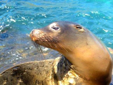 Sea lion on Galapagos Island