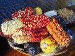 Peru corn