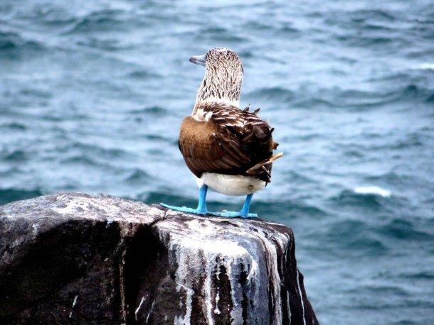 Bird with blue feet