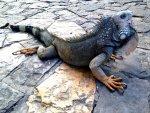 Iguana Park Quayaquil