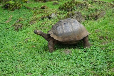 Tortoise Galapagos Island