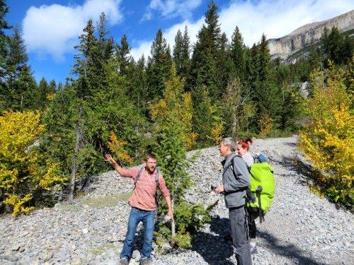 Near Grotto Mountain Canmore
