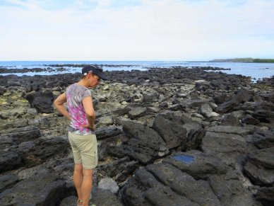 Riocky shore Santa Cruz Island Galapagos