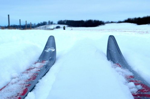 cross country skiing on the prairies image