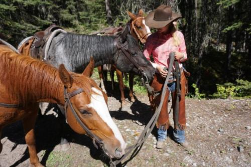 Horses banff national park