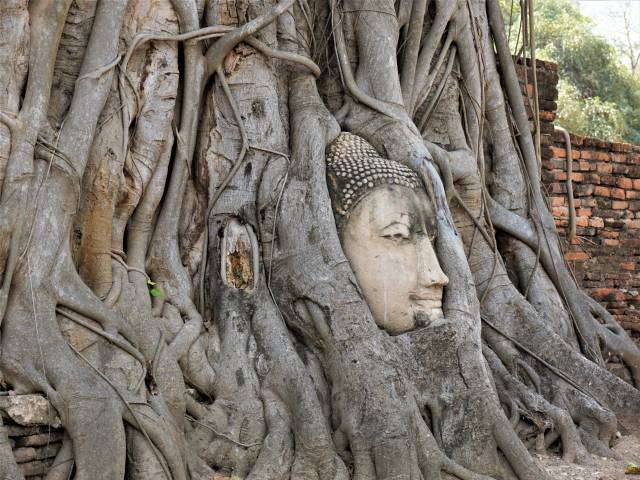 Why Is A Buddha Head in Tree Roots? Ayutthaya Thailand - Travel Tales of Life