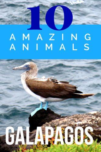 Planning your Galapagos Islands travel? Click to learn about 10 incredible Galapagos animals. #Ecuador #Galapagos