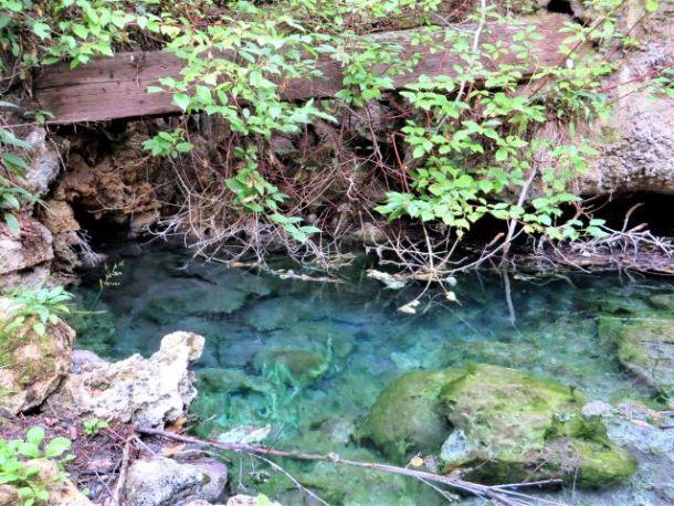 Banff Springs snail habitat Geothermal spring waters