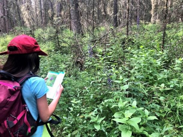 Identifying alberta wildflowers on Calgary day trip