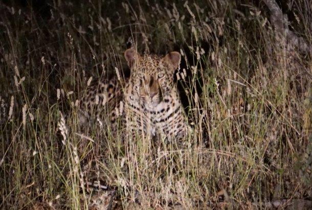 Leopard Greater Kruger National Park