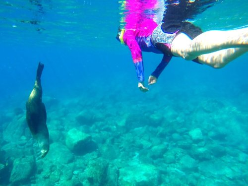 Snorkel with sea lions