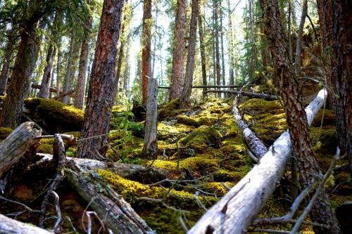 Spring Alberta Rockies