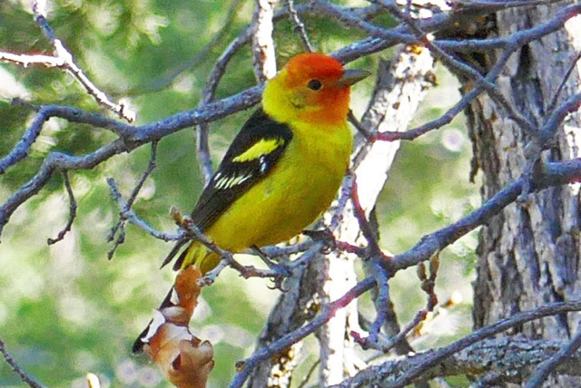 Discovering Birding - A Positive Side to COVID-19 • Travel Tales of Life