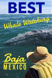 Gray whale migration brings the friendly whales to the shallow lagoons of Baja Mexico. Click to find the best way to go whale watching in Mexico. #Whale #graywhale #whalewatching #Mexico