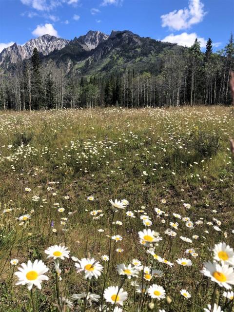 Wildflowers Banff National Park