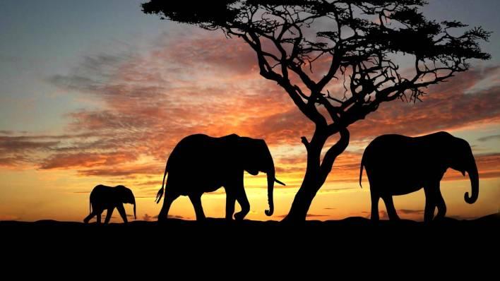 نبذة عن قارة أفريقيا 4