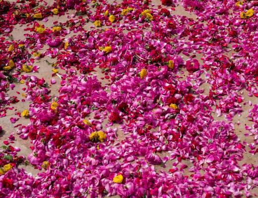 Flower petals scattered outside a temple in Maduari
