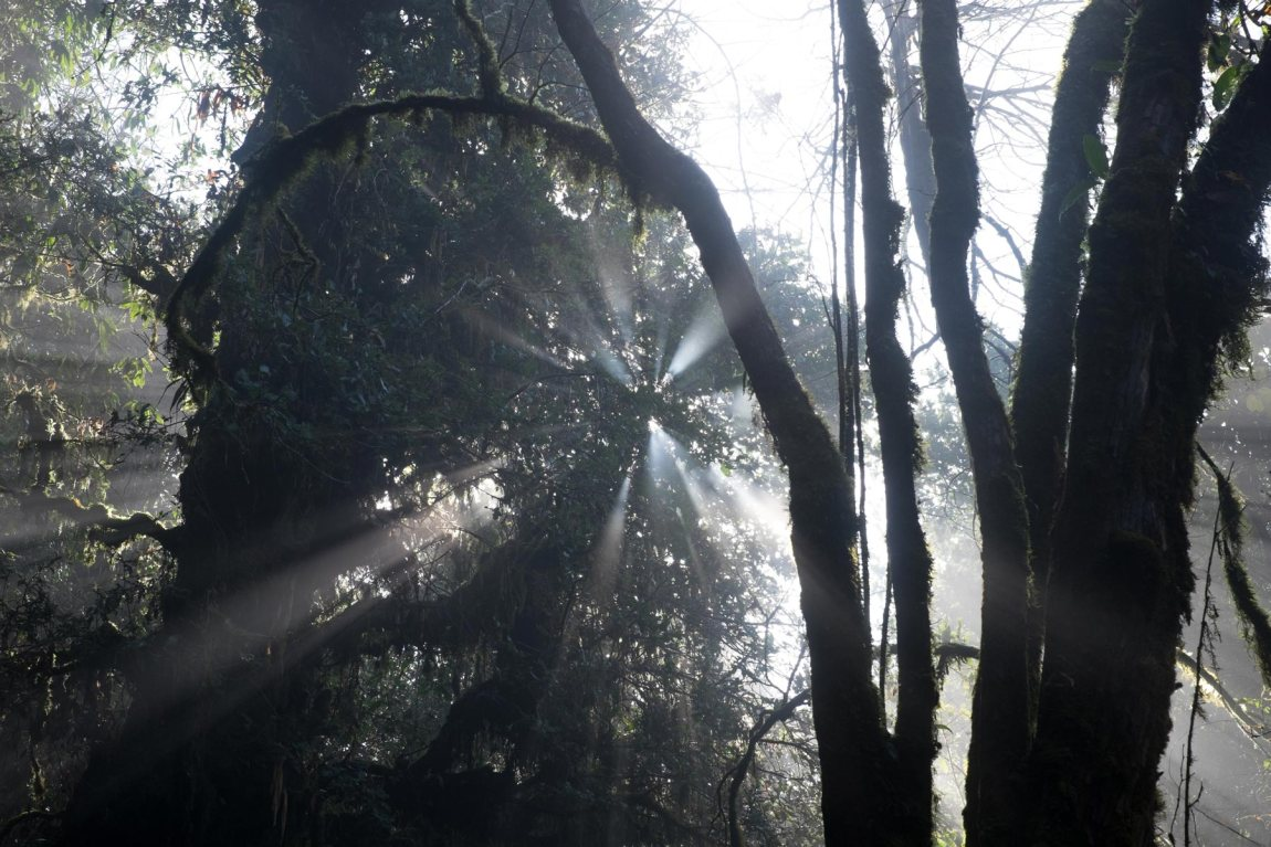 Light in the forest on the Mardi Himal trek