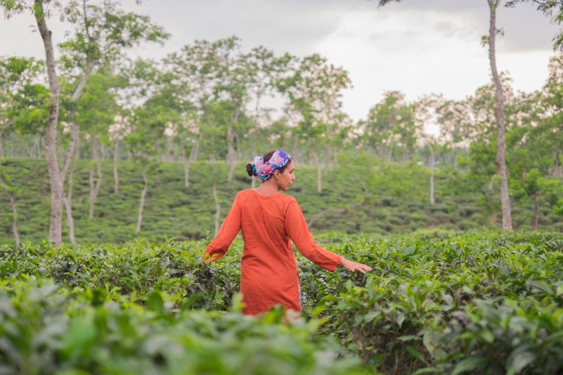 Walking in the tea fields in Bangladesh.