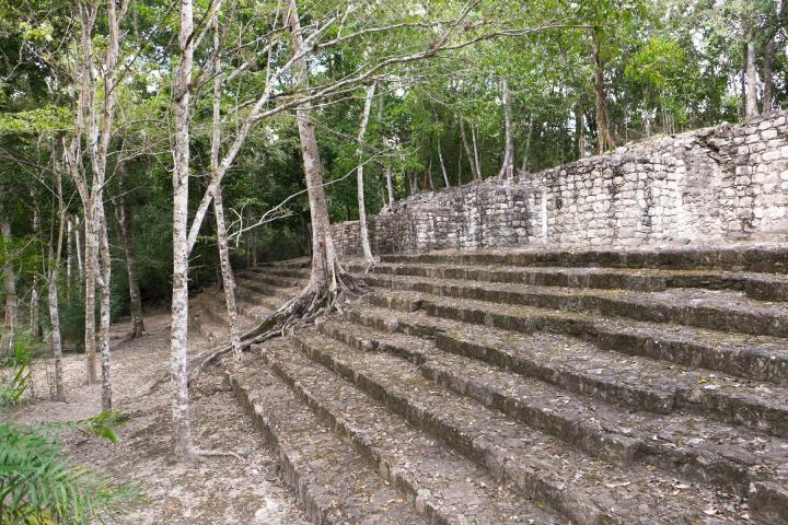 Trees growing over Mayan ruins in Mexico.