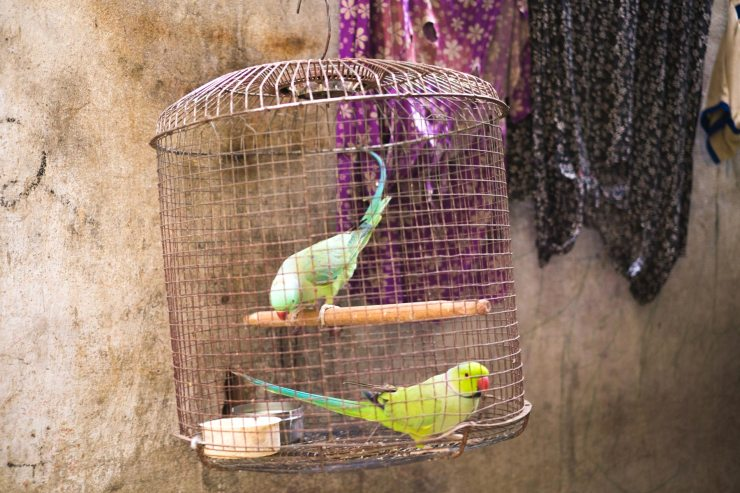 Caged birds in Varanasi