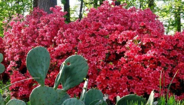 Washington Arboretum for FREE