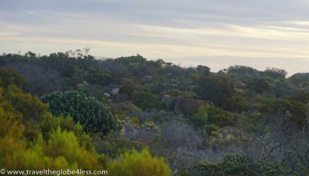 Eland sighting on Cape Point