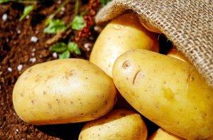 Curiosità sulla Francia patate
