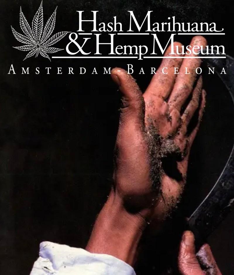 museo della cannabis hash marihuana hemp museum amsterdam olanda traveltherapists