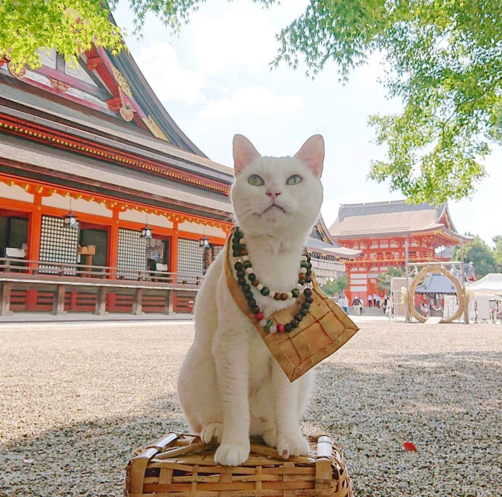 nyan nyan ji koyuki kyoto il mio viaggio in giappone traveltherapists santuario gatti in posa