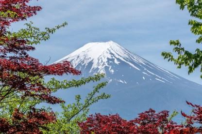 foglie rosse alberi monte fuji fujisan il mio viaggio in giappone traveltherapists miglior blog di viaggio