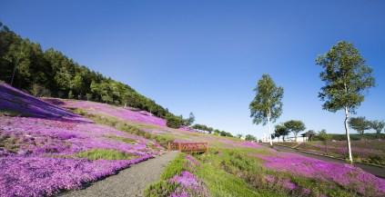 campi sakura-chiba kanagawa il mio viaggio in giappone Vivere e soggiornare in Giappone traveltherapists blog giappone miglior blog di viaggio