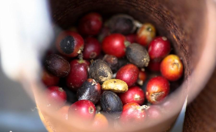 Kona Coffee Living History Farm (2 of 6)