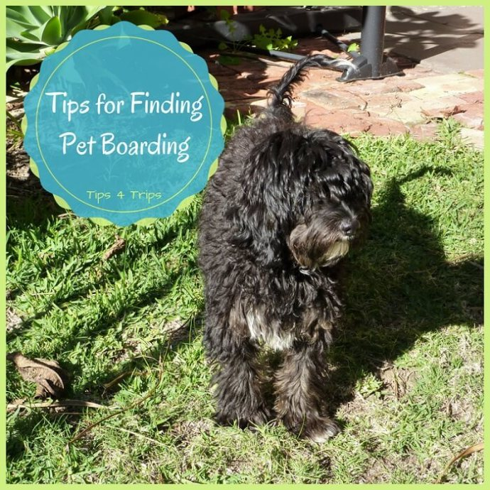 travel tips for finding a pet boarding kennel when you next go on holiday.