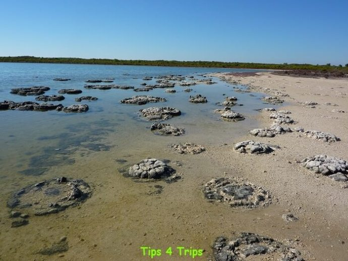 The 3500-year-old stromatolites and thrombolites at lake Thetis. Learn what to expect at Lake Thetis located near Cervantes and the Pinnacles.