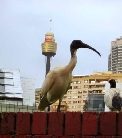 Wildlife & Sydney Tower - Sydney, NSW, Australia