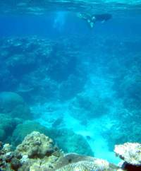 The GREAT BARRIER REEF is the only natural structure visible from outer space.