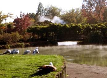travel, destinations, photography, culture, facts, New Zealand, Kiwi, Rotorua,