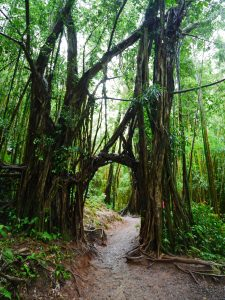 manoa falls hawaii hawai honolulu usa blog voyage travel roadtrip travel to the moon and back traveltothemoonandback