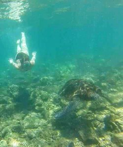 tortues Big island hawaii road trip usa travel blog voyage travel to the moon and back traveltothemoonandback