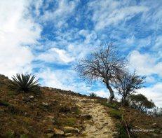 Monte Alban - trees (1)