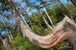 Wild Pacific Trail (3)