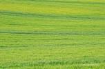 wpid-spain-monochromatic-2.jpg.jpeg