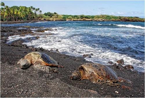 Top 5 Beaches For Sea Turtle Watching Travel Tweaks