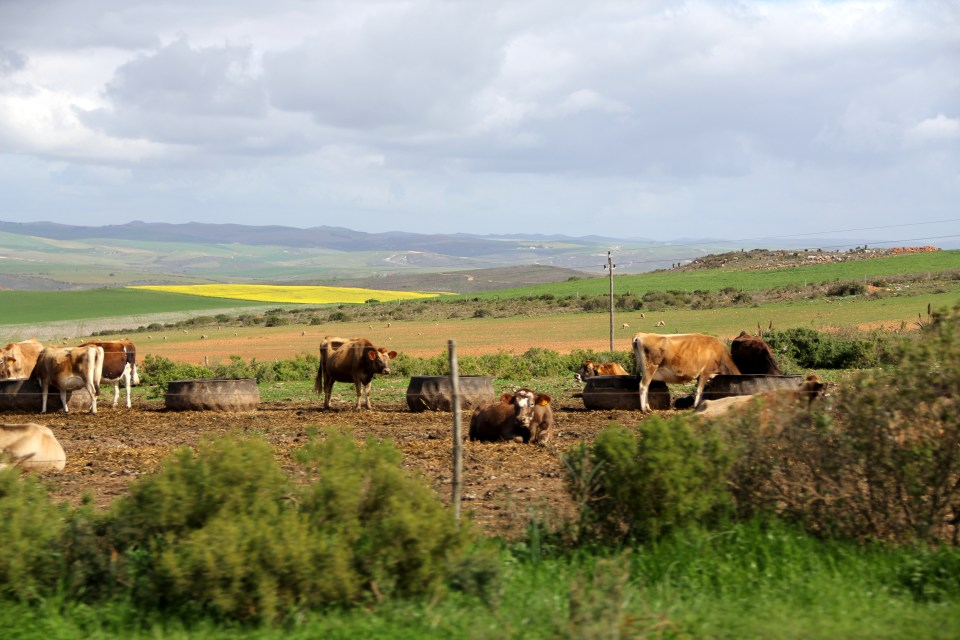 Hinterland South Africa