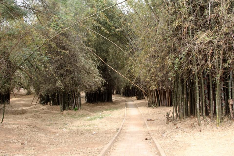 Bamboo Bengaluru 2