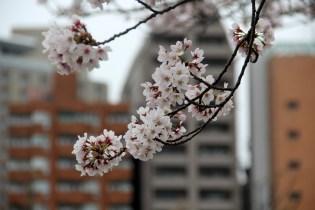 Tokyo Ueno Shinobazu Pond