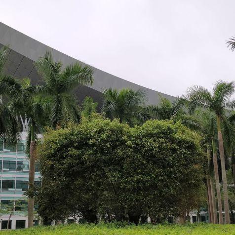 Shenzhen Civic Center